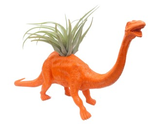 Dino Planter-Gordon from Collected $75.00