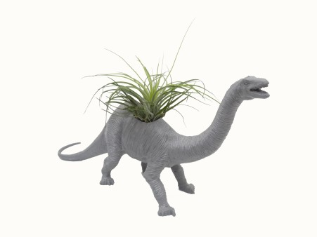 Dino Planter-Nessie from Collected $60.00