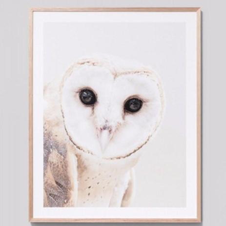 Framed Print Curious Owl $429.00NZD