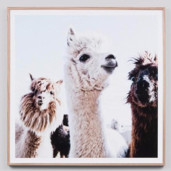 Framed Print Llama Friends $ 429.00